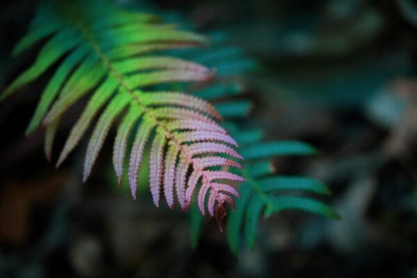 Leaf Photo Art Work
