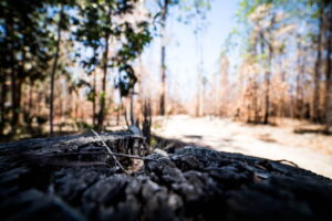 Charred Forest Photo Art Work