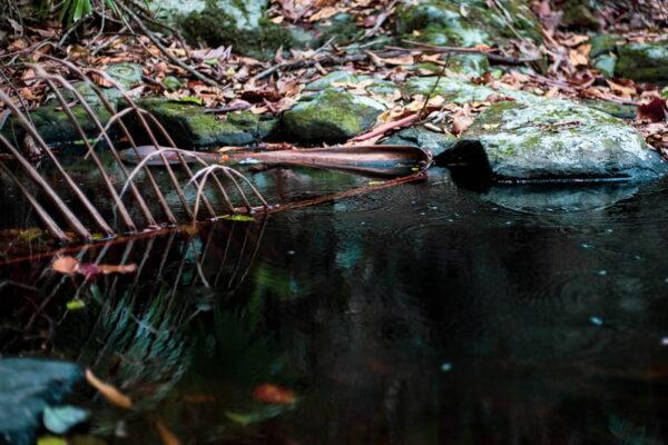 Drought Creek Dead Palm Frond Photo Art Work
