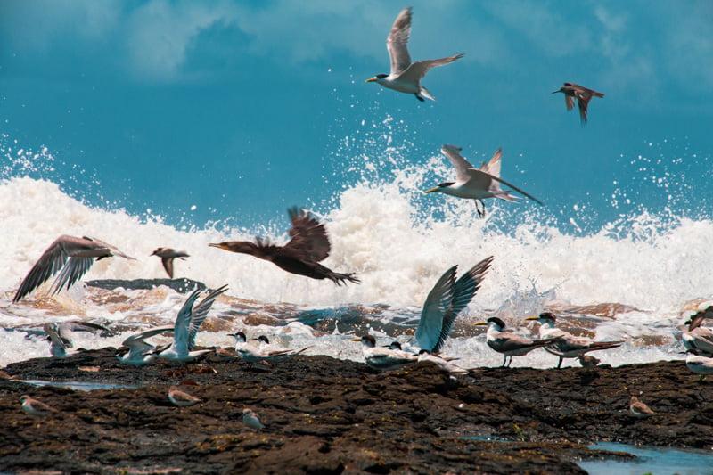 Flight Fury