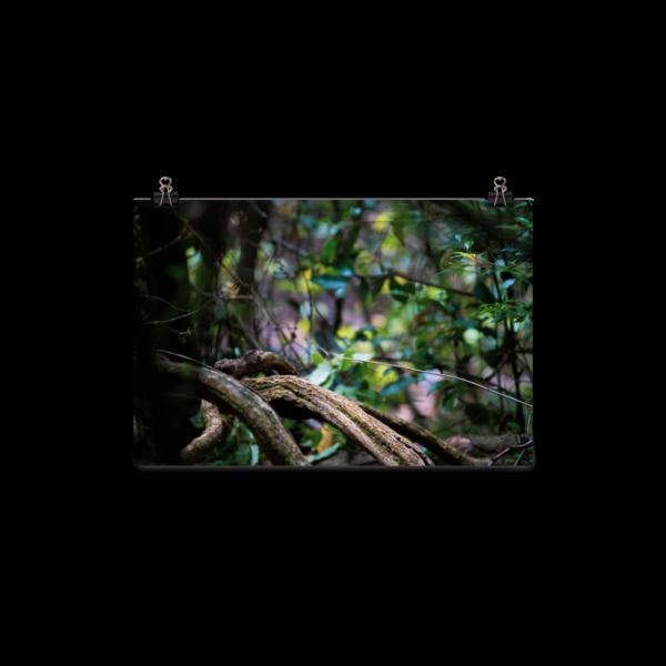 Push Pull Forest Photo Art Work