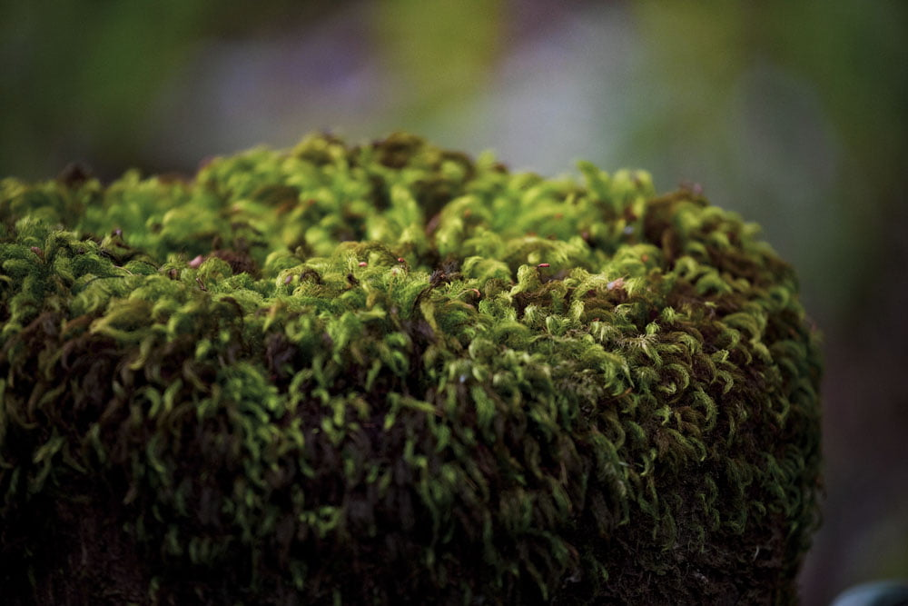Mossy Top